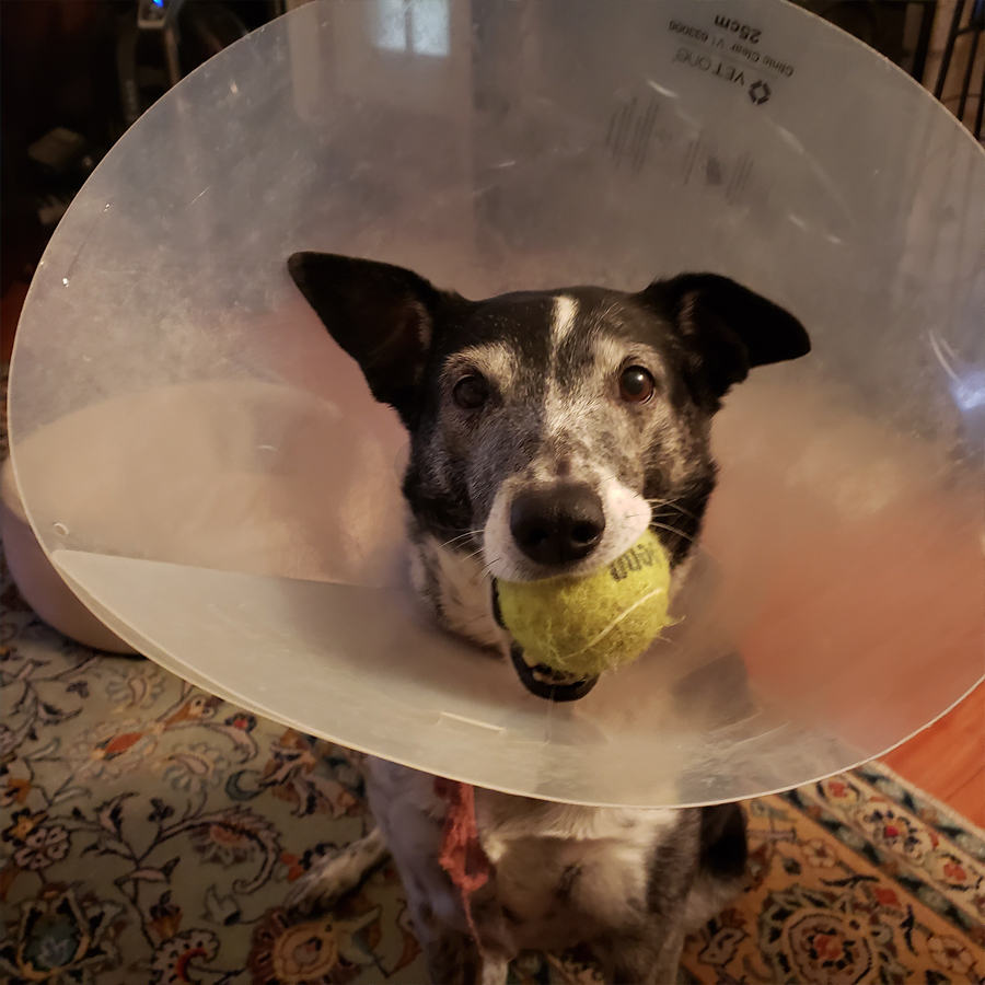 spreckles-in-a-lampshade
