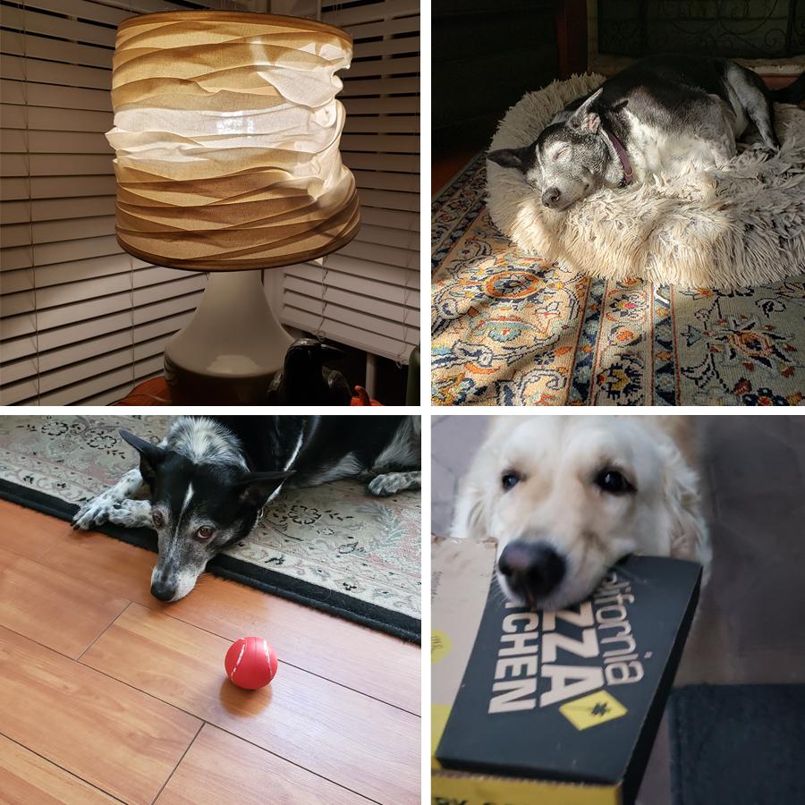 3-ring-dog-circus