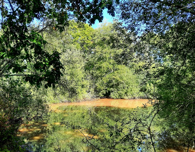 Pond by Furze Field, Low Weald 1
