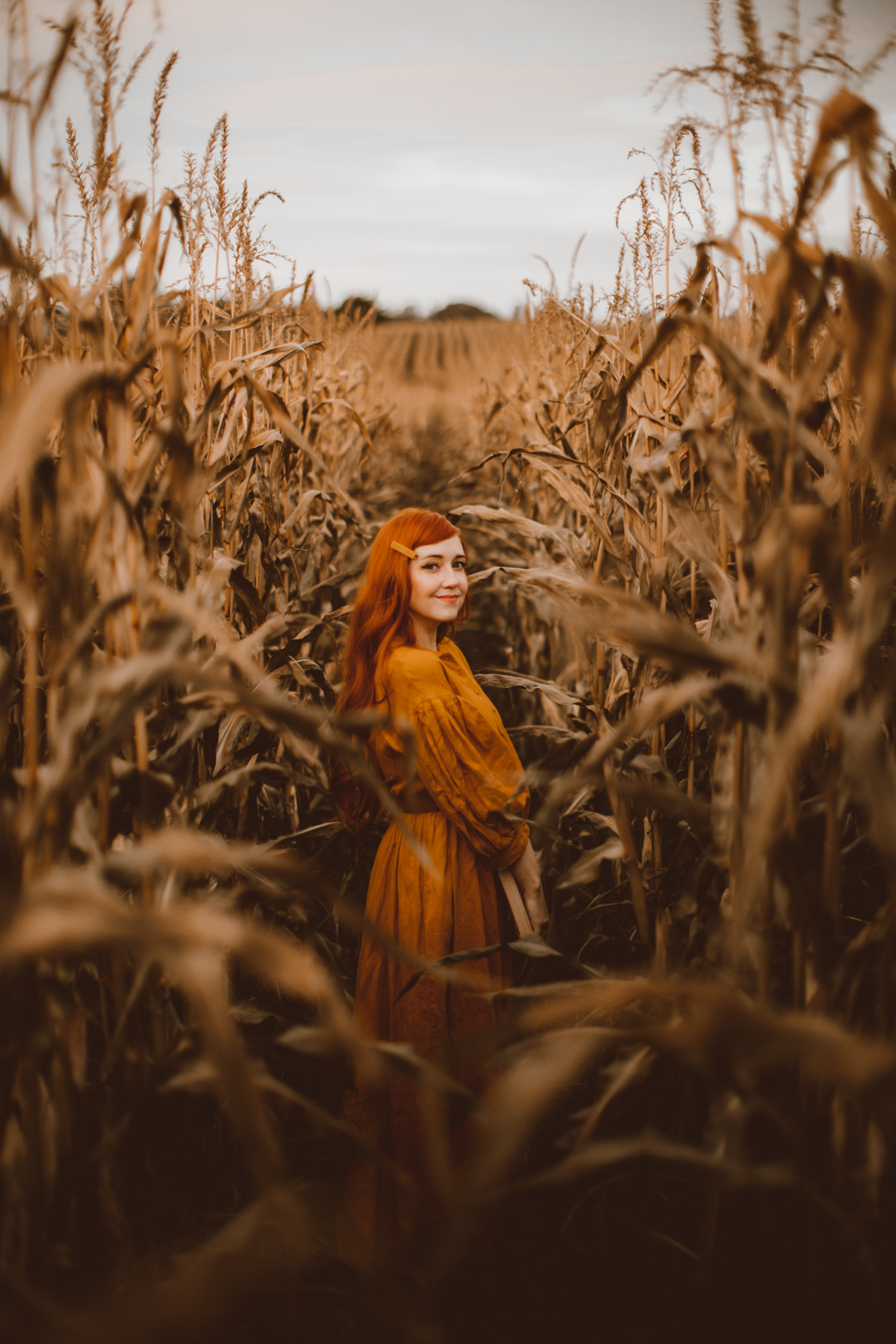 cornfield-5