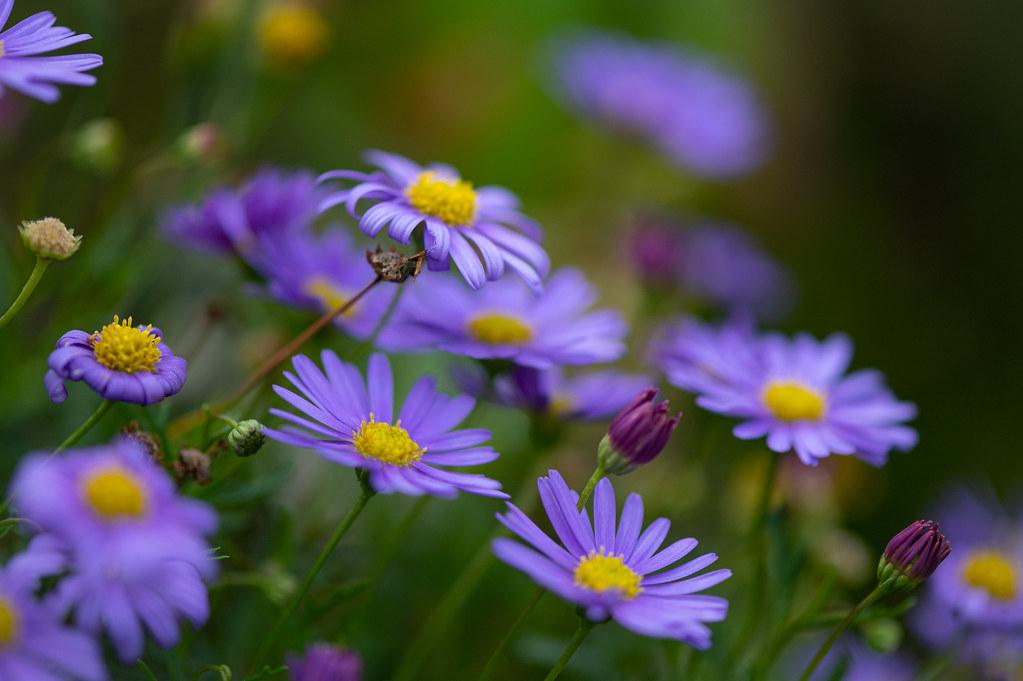 Little purple color spots
