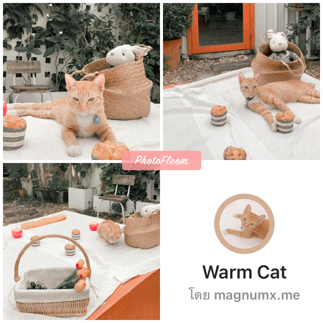 review IG filter Warm Cat for Cafe