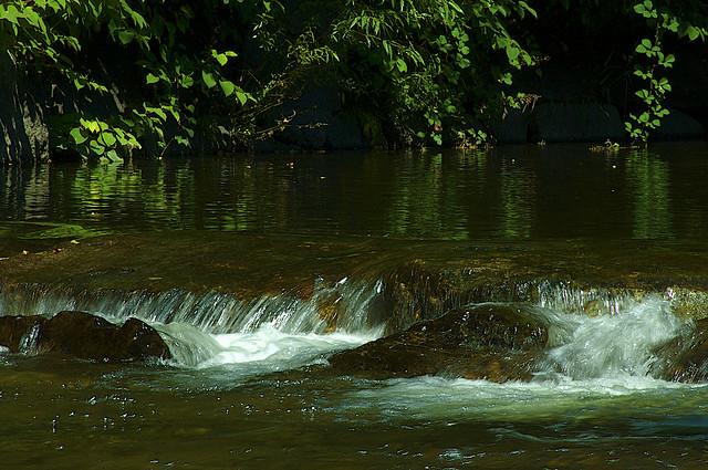 River in Bright Summer Light