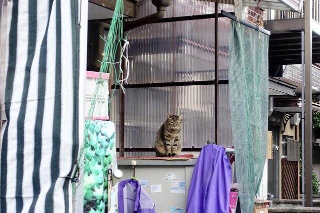 Today's Cat@2020ー10ー02