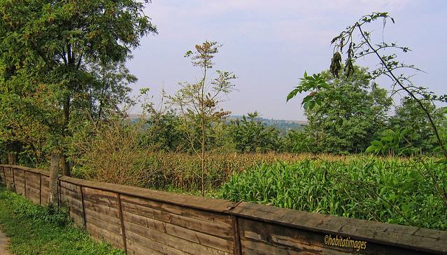 Moldovan Farm Fence