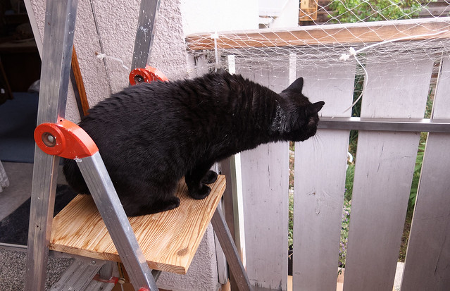 Timmy on his ladder ...