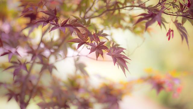 autumn glowing