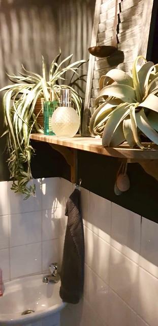 Planten planken in het toilet