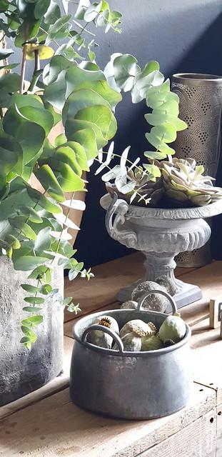 Franse vaas met vetplant