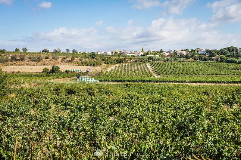 Vista de Bellver y Els Prats subiendo hacia los Pèlags de Vilobí
