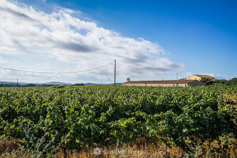 Granja entre viñedos de Font-rubí