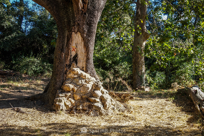 Montón de piedras a los pies de una encina centenaria en la Font de les Graus