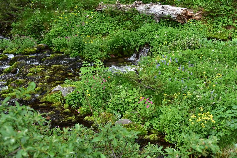 Snowgrass Creek