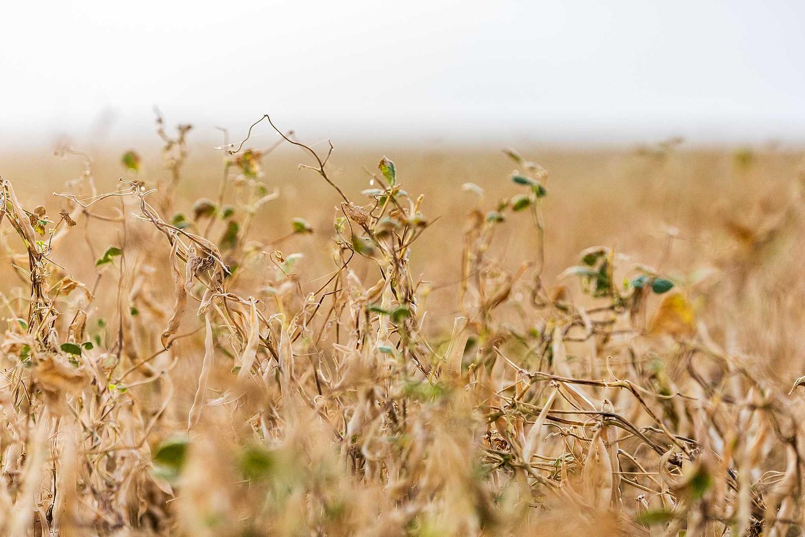 2020 High Plains Harvesting