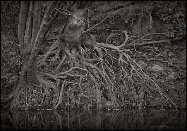 Roots Study 2020, No. 28