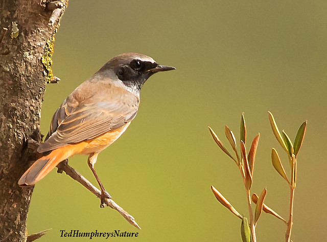 Redstart branches out