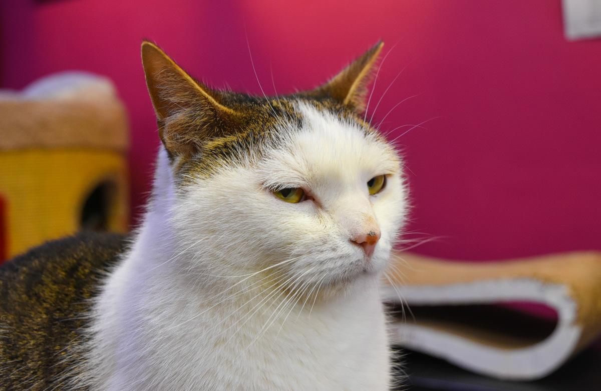 CatsCafe-(20)