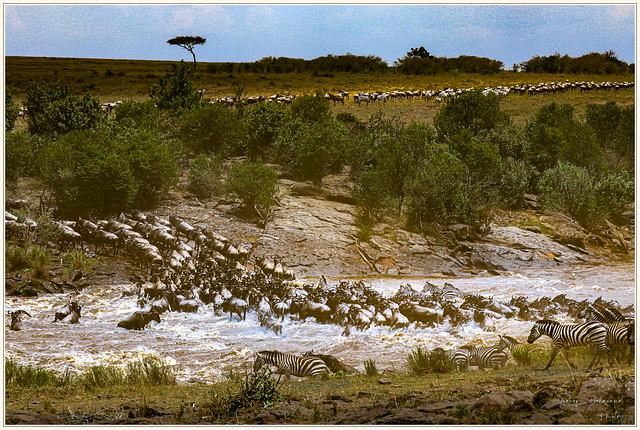 Crossing dans la Mara Kenya