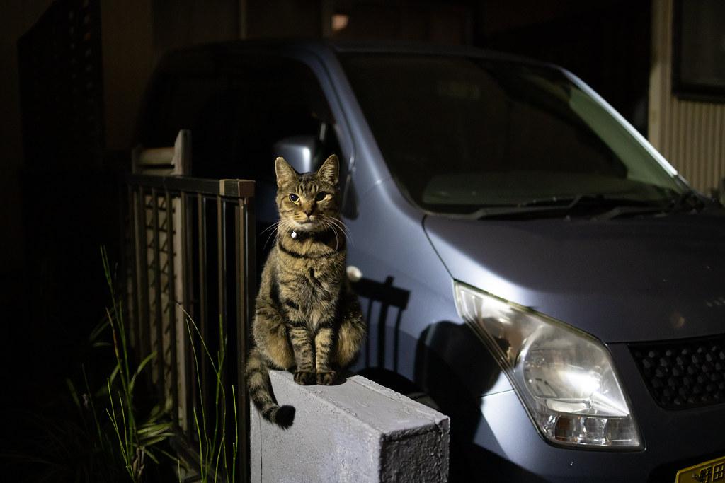 猫 2020/10/03 IMG_3675