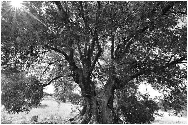 Nunca digas que ya no hay nada hermoso en este mundo. Siempre hay algo para maravillarte en la forma de un árbol, en el temblar de una hoja.