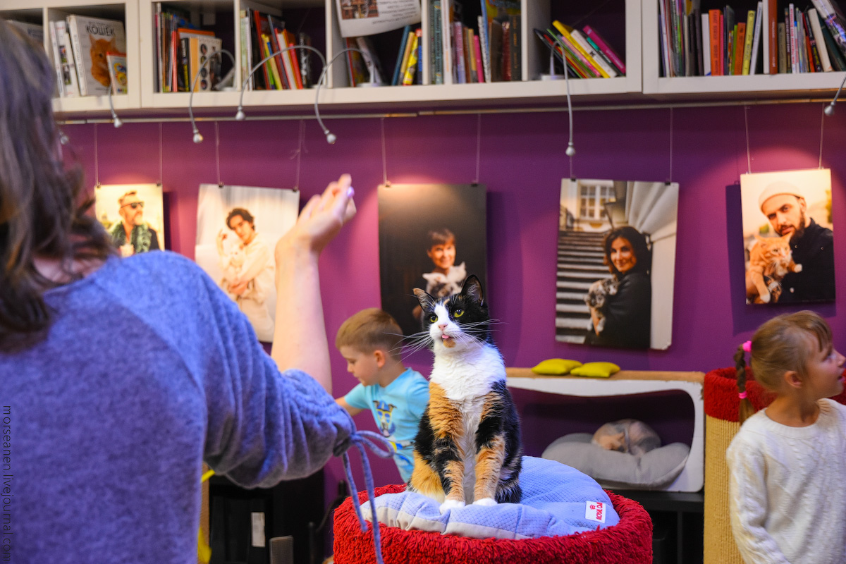 CatsCafe-(10)
