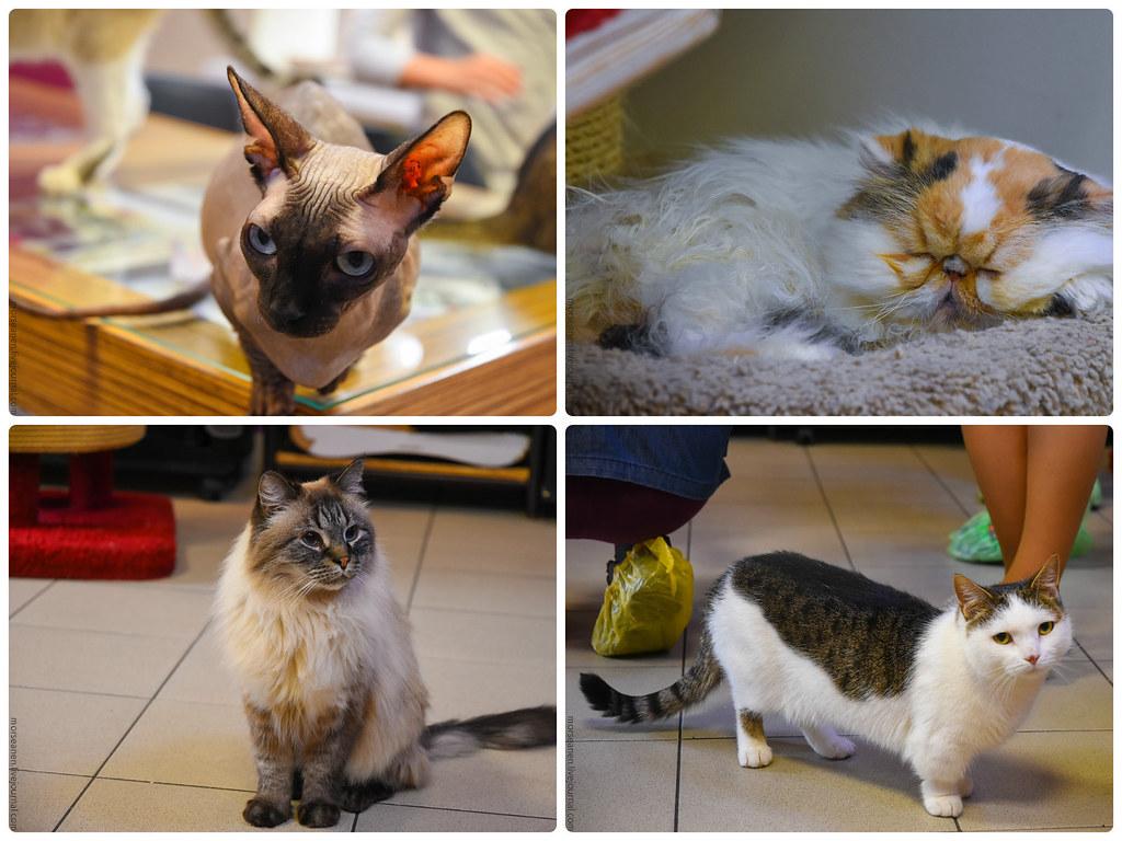 CatsCafe (2)