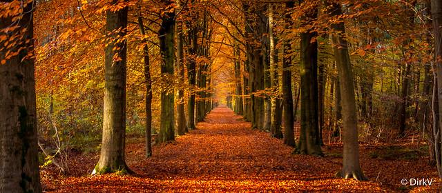 Autumn, Malle, Belgium