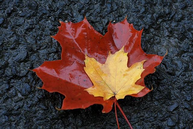Herbst in Schwarz-Rot-Gold...