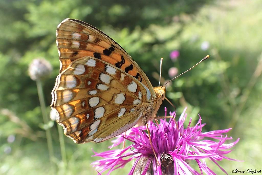 Butterfly 2070
