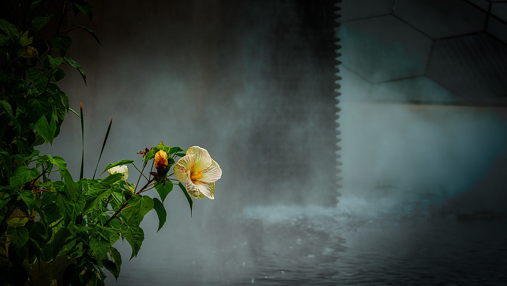 Hibiscus in pool by falls