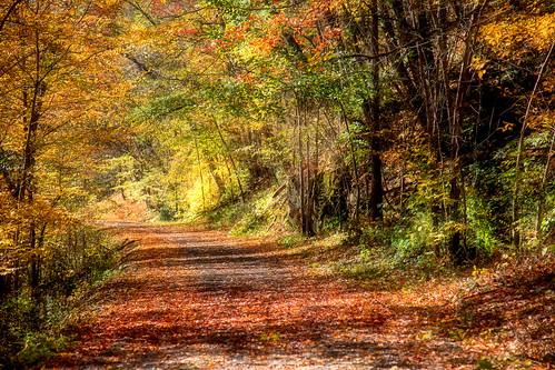 bath nh newhampshirenew england autumn 2020 fall light sunlight leaves canon eos pro october pretty landscape season