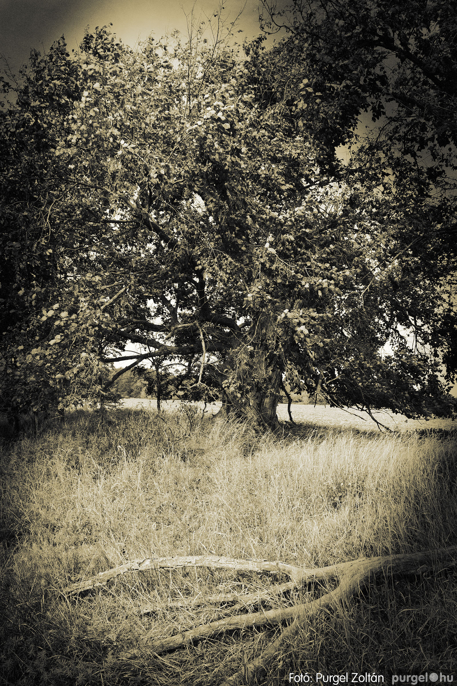 012 2020.10.03. Horgászverseny a Lándoron - Fotó: Purgel Zoltán© _DSC2908q.jpg