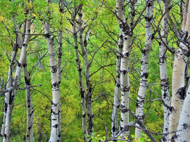 Day 7 -  Flin Flon MB to Prince Albert SK - Lovely woods