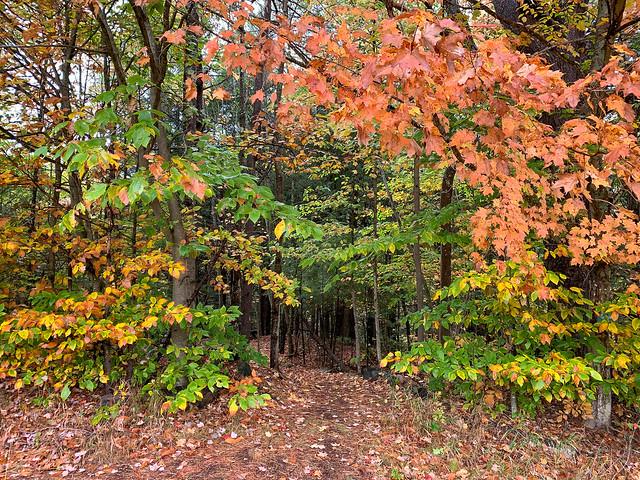 Lyme Hill: hiking newhampshire lyme lymehillconservationarea unitedstates