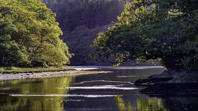 DSC_2511: River Lerryn at Ethy Rock, , Cornwall [In Explore]