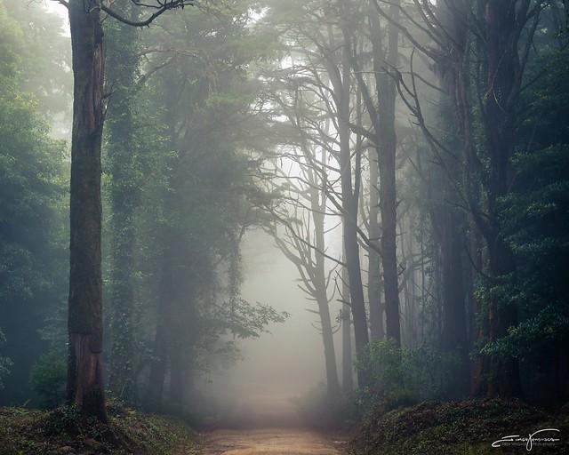 Walking throughout wind, fog and rain