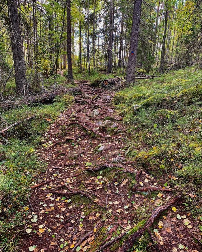 salamajärvi_0