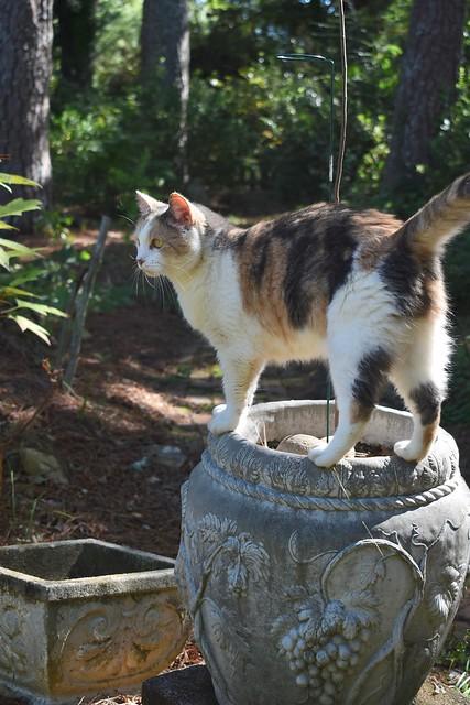 Gracie Jo on the tall urn