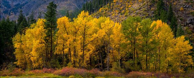 Autumn Colors Pano