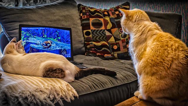 Virtual Birdwatching on a rainy day