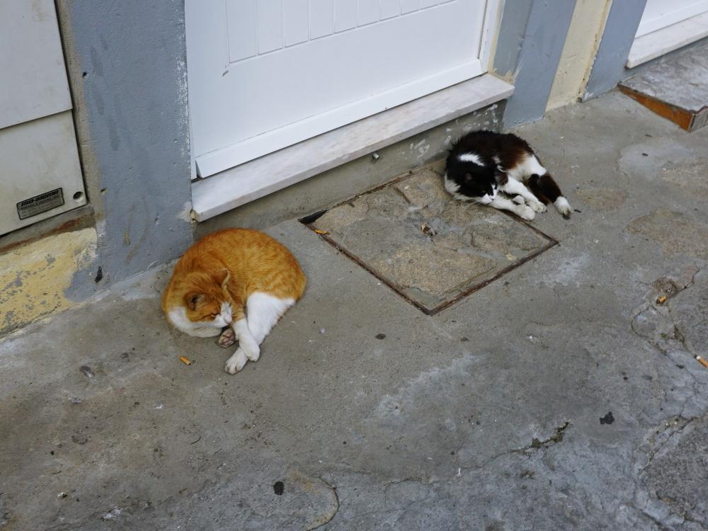cats in Porto