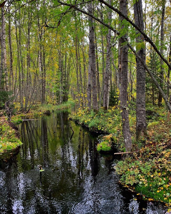 salamajärvi_10