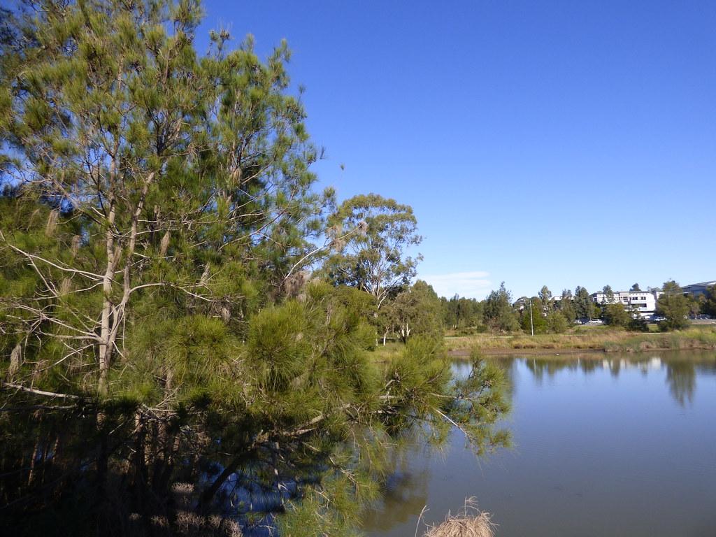 Pemulwuy, NSW, June 2020