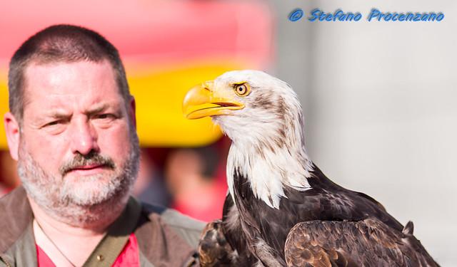 Bald eagle - photokina 2014