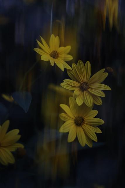 autumn, double exposure