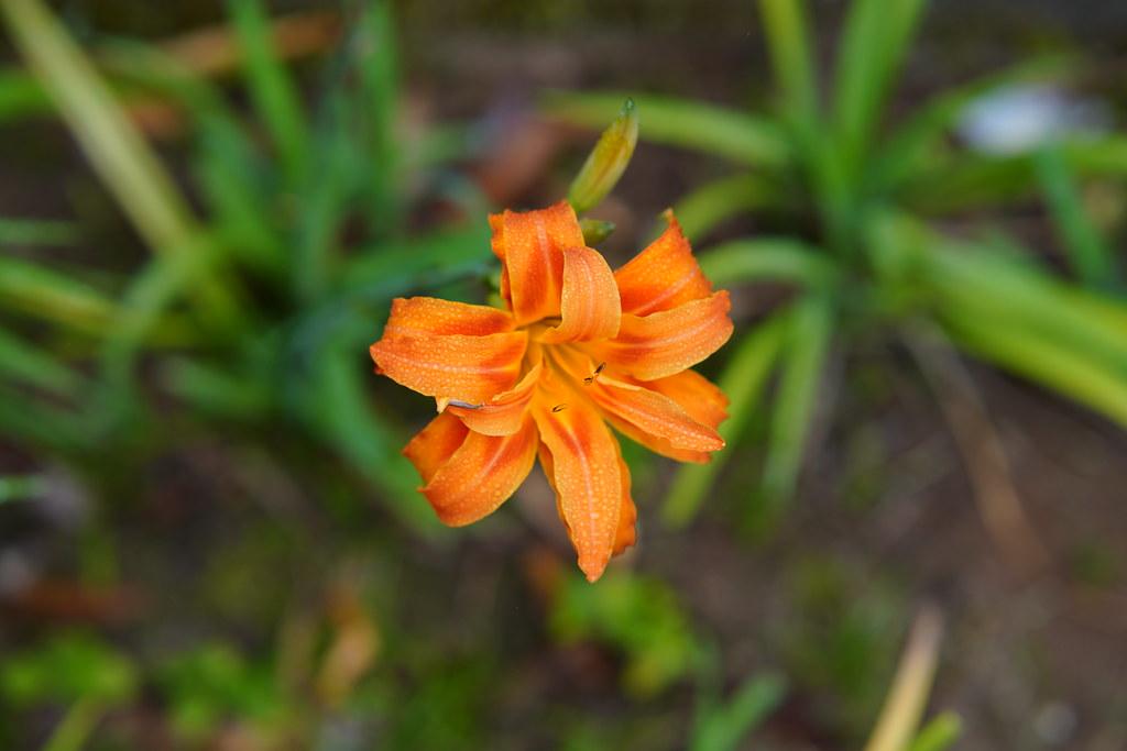 Flowers by Samyang 85mm 1.4