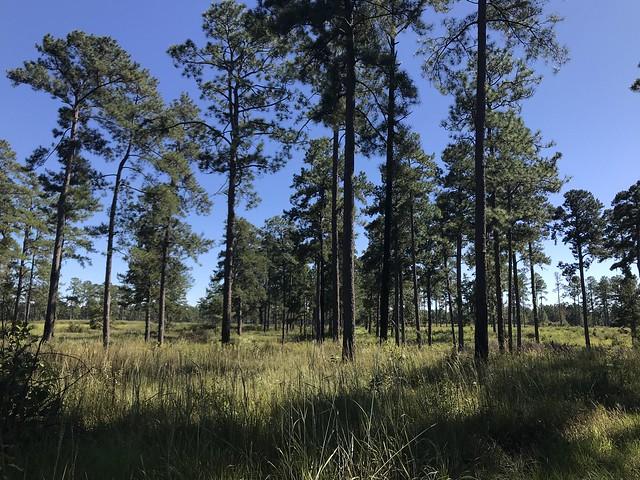 Groton Plantation