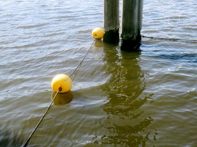 aquatic demarcation01