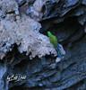 Sierra Gorda - Macaw - 215