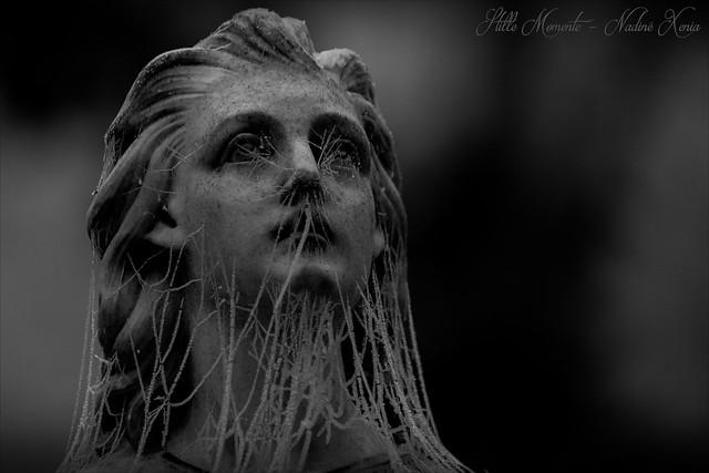 The Cobweb Veil....
